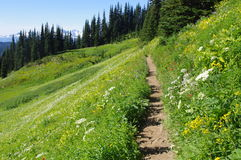 Hiking trail through flower meadows Royalty Free Stock Photos