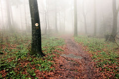 Hiking trail. In a foggy forest stock photography