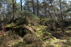 Hiking trail in Fontainebleau forest. St Germain rock trail in Fontainebleau forest Stock Photos