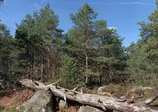 Hiking trail in Fontainebleau forest. St Germain rock trail in Fontainebleau forest Stock Image