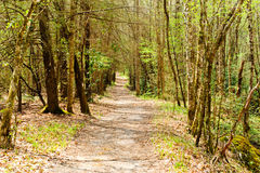 Hiking trail in the forest Stock Photos