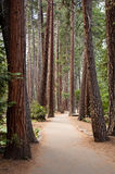 Hiking trail through forest. Hiking trail through pine forest in Yosemite Valley, Yosemite National Park, California, USA stock image