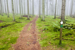 Hiking trail through a forest Stock Images