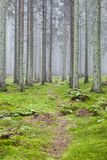 Hiking trail through a forest Royalty Free Stock Photography