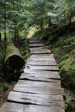 Hiking trail in forest royalty free stock image