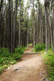 Hiking trail in forest Stock Photos