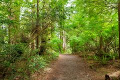 Hiking Trail through Forest along Lewis and Clark River royalty free stock photos