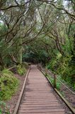 Hiking trail in the forest of Anaga, Tenerife stock photo
