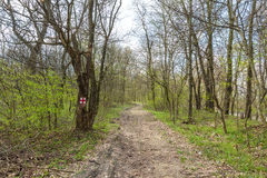 Hiking trail in the forest Royalty Free Stock Images