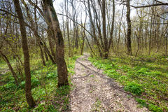 Hiking trail in the forest Stock Photography