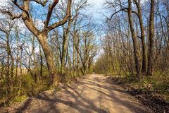 Hiking trail in the forest Stock Images