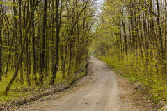 Hiking trail in forest Stock Image