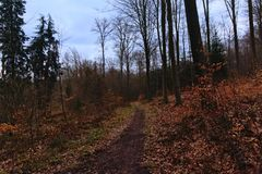 Hiking trail through a forest in Belgian Ardennes. Liege, Belgium Stock Photo