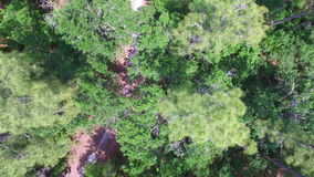 Hiking trail in a forest. Drone footage of a hiking trail in a forest in Central Florida
