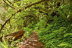 Hiking trail in forest with ferns and green plants. Hiking trail path in forest with lush green ferns along side landscape stock photo