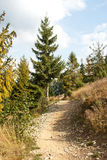 Hiking trail in forest royalty free stock photos