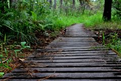 Hiking trail in forest. In Charleston, SC stock photography