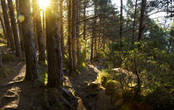 Hiking trail in a forest. Norway stock photos