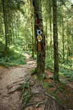 Hiking trail in forest Stock Photo