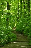 Hiking trail into the forest Royalty Free Stock Photo