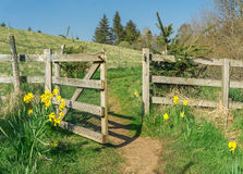 Hiking trail through gate and flowers. Road to success. Springtime. Stock Photography