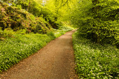 Hiking trail going into bright woods Stock Photo