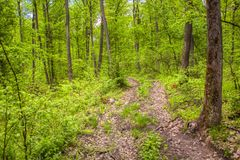 Forest hiking. Hiking trail in the green forest royalty free stock photography