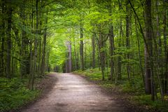 Hiking trail in green forest royalty free stock photos