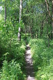 Hiking trail. A hiking trail in the green Rhön Royalty Free Stock Photography