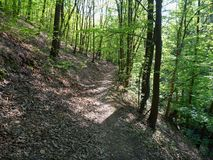 Hiking trail in the green wood Stock Image