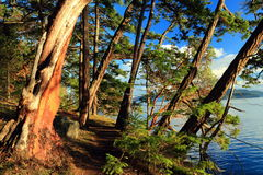Hiking Trail in Gulf Islands National Park, British Columbia. Coastal Hiking Trail along Bennett Bay to Campbell Point on Mayne Island through the Arbutus and Stock Images