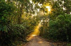 Hiking trail at Gunung Nuang Malaysia Stock Photos