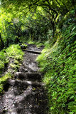 Hiking trail in Hawaii Stock Photography