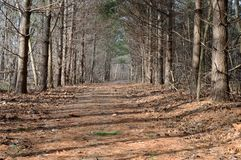 Hiking Trail. At one of the many metro parks in Ohio. Taken in the early spring stock photos