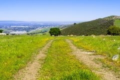 Hiking trail on the hills covered in green grass and wildflowers of south San Francisco bay area, Santa Clara county; San Jose in. The background; California royalty free stock photos