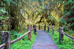 Hiking trail in Hoh Rainforest. In Olympic National Park Washington royalty free stock photos