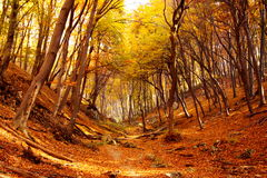 Hiking trail in Hungary in fal Royalty Free Stock Photography