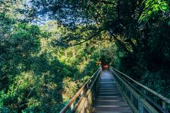 Hiking trail in the Iguazu National Park. A hiking trail to the Higher pass waterfalls at the Iguazu Park in Argentina royalty free stock photo