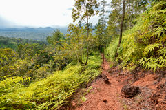 Free Hiking Trail In Cockscomb Basin Wildlife Sanctuary, Belize Royalty Free Stock Photos - 66807698