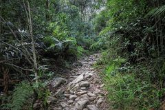 A hiking trail at Jubilee Creek, a picnic spot in the Knysna Forest near Knysna, South Africa Stock Photo