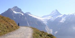 Hiking trail at Jungfrau Stock Image