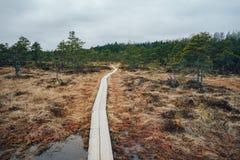 Hiking trail through Kakerdaja fen, Estonia stock photo