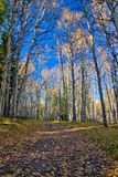 Hiking trail in the Kananaskis region of the Canadian Rockies Stock Photo