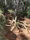 Hiking trail with large broken tree royalty free stock photography