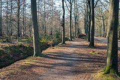 Forest path in a large forest. Hiking trail in a large Dutch forest with tall and bare trees. At the end of the path is a large pile of cut trees Royalty Free Stock Photos
