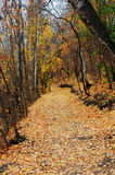 Hiking trail in late autumn forest Stock Image