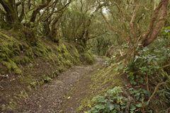 Hiking trail through laurel forest Tenerife Canary Islands stock photography