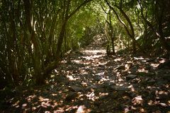 The Hiking trail of Le Pouce mountain stock images