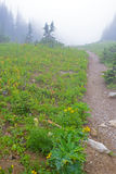 Hiking Trail leading into foggy valley  in Glacier National Park. Royalty Free Stock Photography