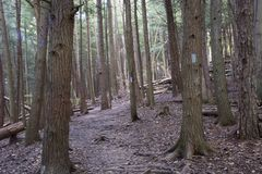 Hiking trail , Ash Cave, Ohio stock photography
